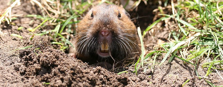 Who Dug That Hole in My Yard: Identifying the Common Types ...